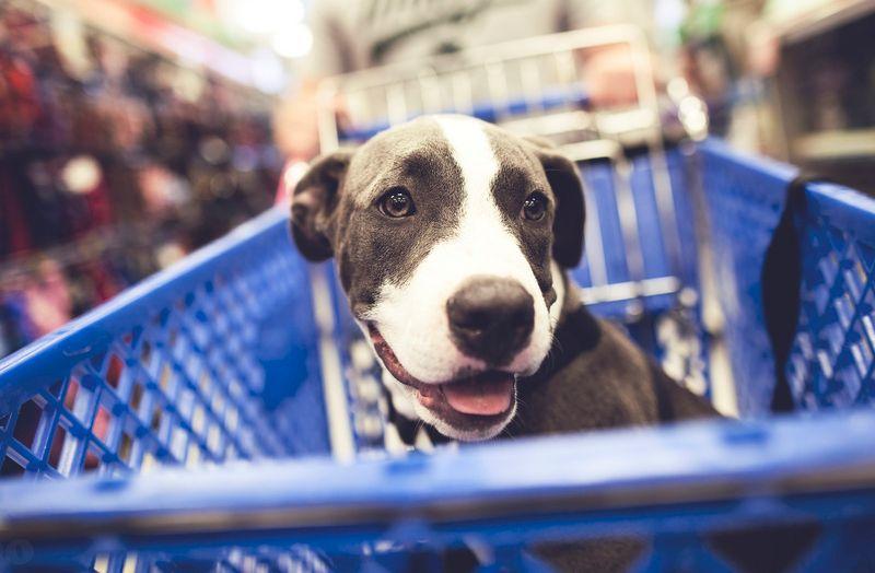 Öt tanács a kutyatáp vásárlásához