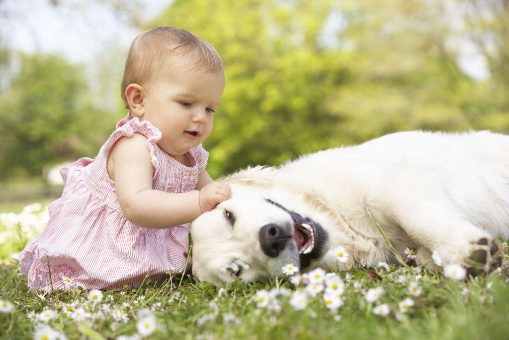 Kisgyermek mellé szeretnél kutyát? Ezeket a fajtákat ajánljuk