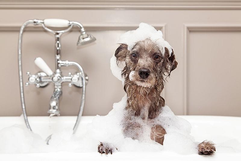 Hogyan gondozzuk a kutyánk szőrét?