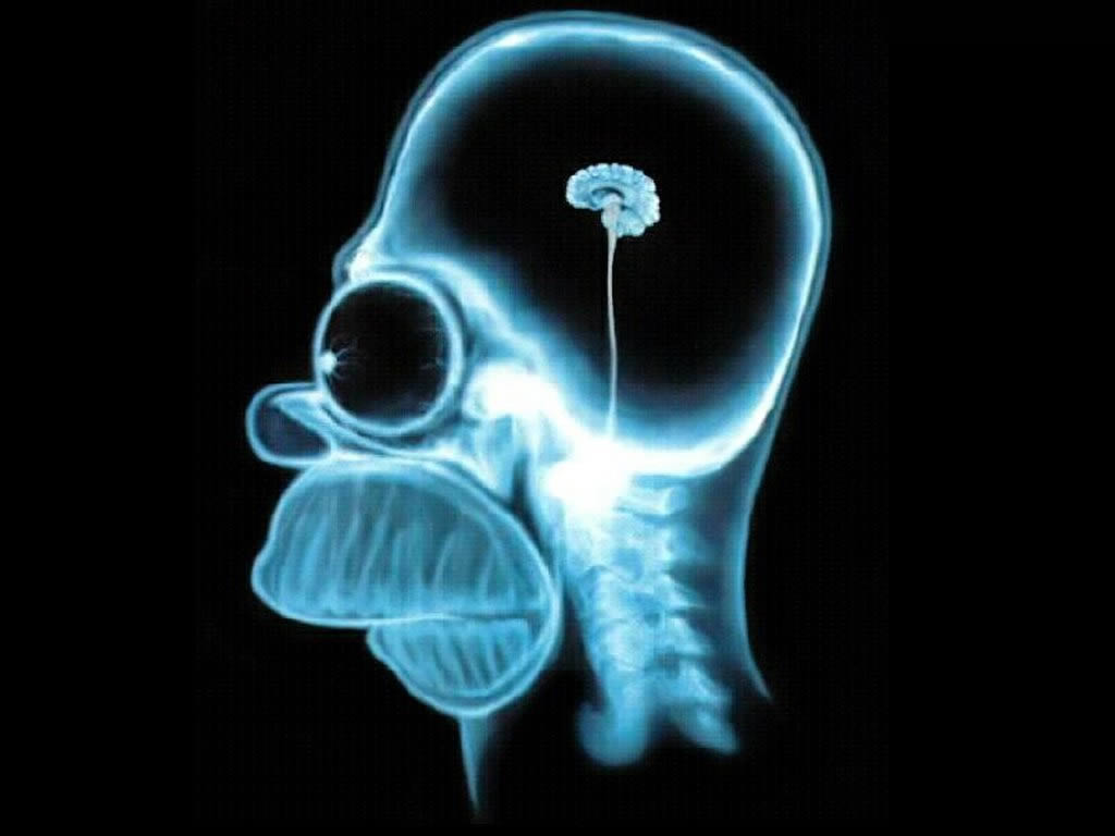 homer-brain-x-ray-the-simpsons-60337_1024_768.jpg