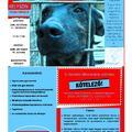 Állatok világnapja - október 11. szombat