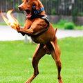 Tüzelő kutyamancsok Photoshopban!