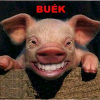 BUÉK! – Best of 2009