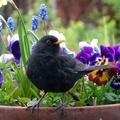 Készíts madáretetőt - gyorsan, szépet!