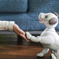 Aibo, Sony legújabb robotkutyája