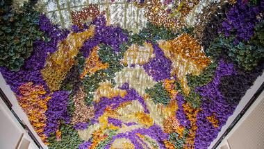 Megfordított virágmező