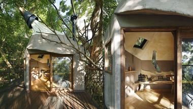 Japán teaház egy 300 éves fán