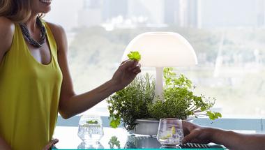 Nevelj növényeket a lámpád alatt!