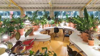 Közösségi iroda 1000 növény társaságában