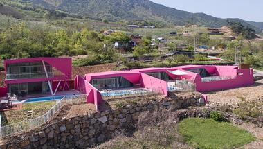 Egy rózsaszín virág Dél-Korea hegyei között