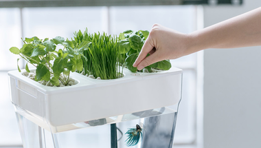 Akvárium fűszernövényekkel