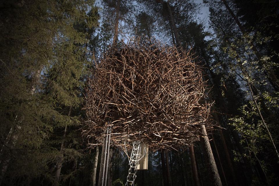 900_birds_nest_exterior_2a.png