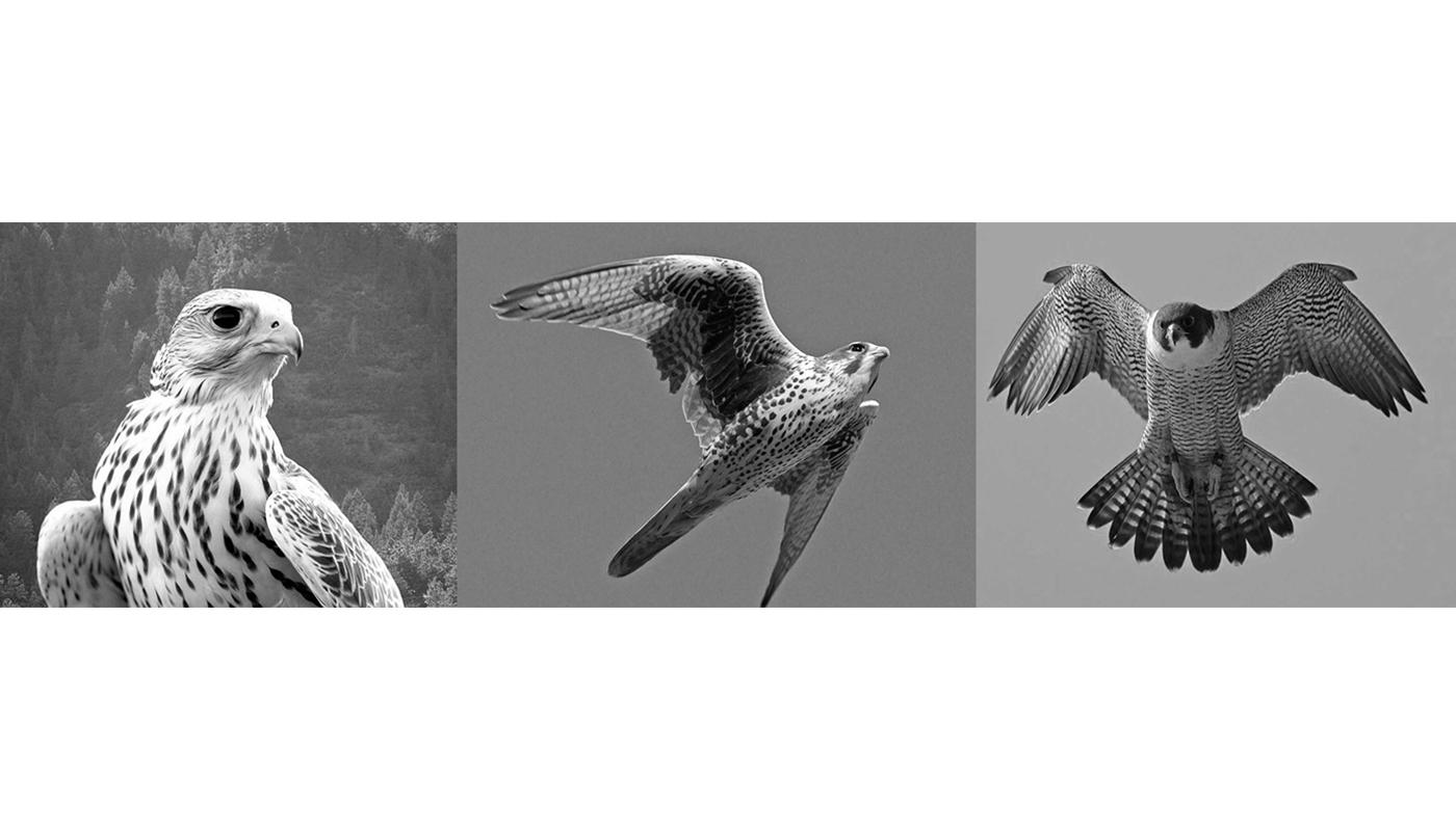 falcon-bench-oleg-soroko-banc-blog-espritdesign-16.jpg