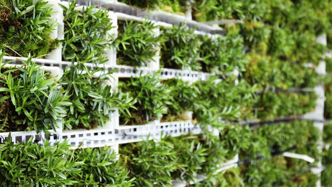 citytree-mur-vegetal-12.jpg