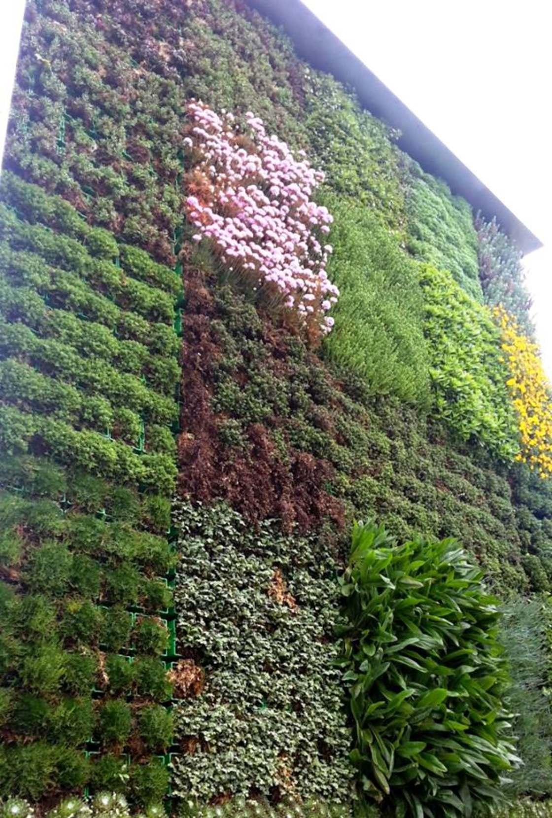 citytree-mur-vegetal-3.jpg