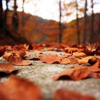 10 lenyűgöző őszi táj