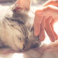 3 érv a macskatartás mellett