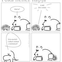 Polármackó vendége: a sün