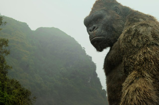 Kong határozottan életképesnek mutatkozik