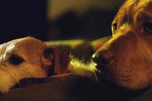 """""""Fogadj örökbe filmsztár kutyákat!"""""""