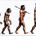 50. Az elhízás evolúciója (átvett cikk)