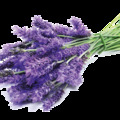 Természetes csodaszerek - Levendula