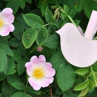 Mutatjuk, hogyan készül az egyik legtündéribb kerti dekoráció