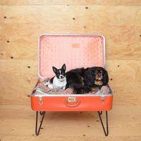 Csináld magad: 9 kreatív alvóhely kutyusoknak