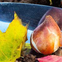 A téli kertészkedés sava-borsa