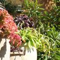 Mediterrán edénykert