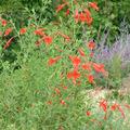 Kedvenc növénytársításaim őszre
