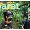 Kutyabarát kert - Kertészkedés kutya mellett