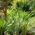 Mediterrán kert kora tavasszal