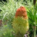 Mediterrán kert májusban