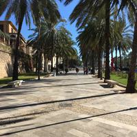 Mallorca és a tengeri herkentyűk