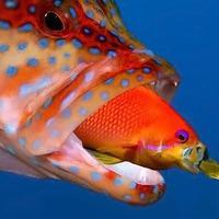 A kishal esete a nagyhallal