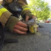 Újraélesztett egy kiscicát egy tűzoltó - Videó