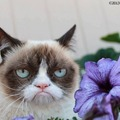 Film készül a morcos macskáról - Videó