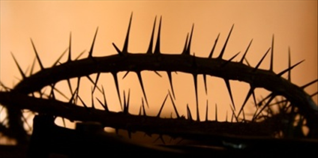 4431-crown_of_thorns_edited_630w_tn.png