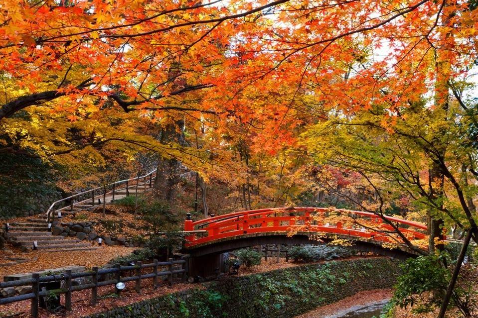 kitano-tenmangutemple-autumn-leaves-kyoto-fall-foliage-forecast-2016.JPG