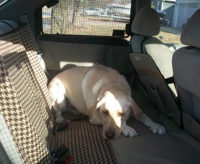 dog_backseat.JPG