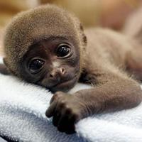Empatikus majmok