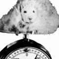 Holdjáró súlyproblémákkal - II. rész