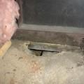 Honnan tudom hogy patkány? Patkány ürüléke és földlyuka