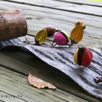 Mit tegyél, ha őszi termésbe botlasz séta közben?