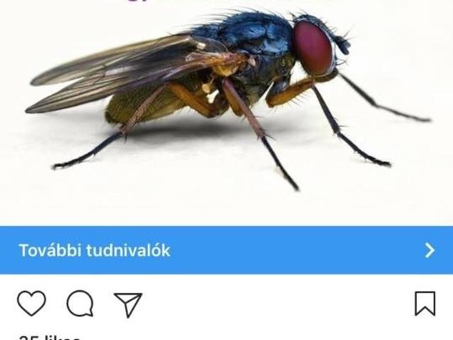 5 magyar reklám baki, amin a fél ország röhög