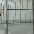 Sia új klipje ismét egy érzelmileg megviselő tánckoreográfia