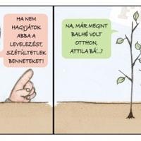 Szét lesztek ültetve