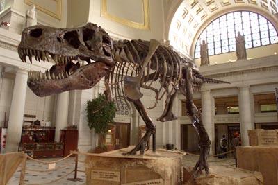 age-dinosaur-bones-1.jpg