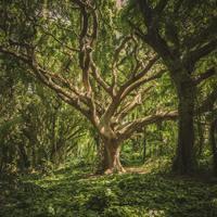 Az értünk elszáradt fügefa